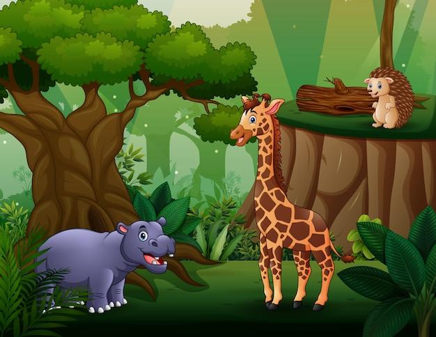 Diferentes animais que vivem na selva