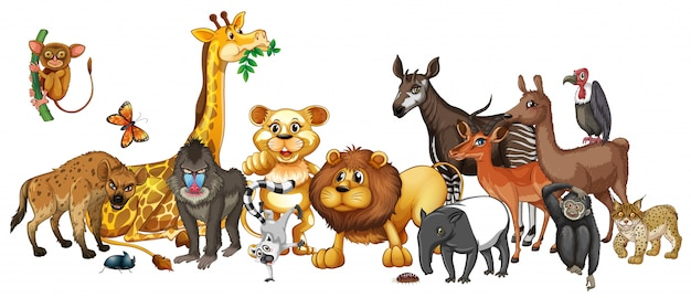 Diferentes animais selvagens em branco