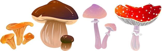 Diferentes cogumelos voam agaricsvector cogumelos