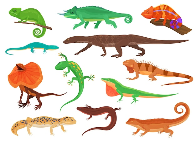 Diferentes espécies de lagartos