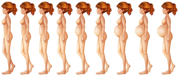 Diferentes fases da gravidez