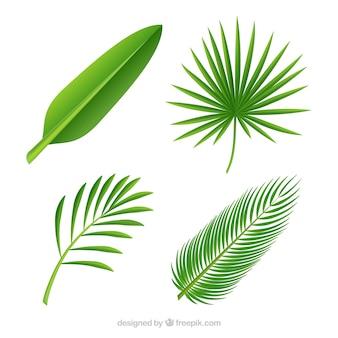 Diferentes folhas de palmeiras
