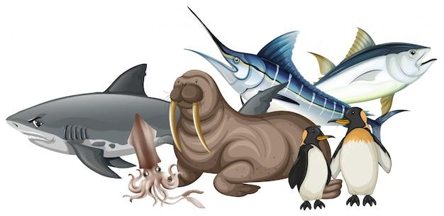 Diferentes tipos de animais marinhos em branco