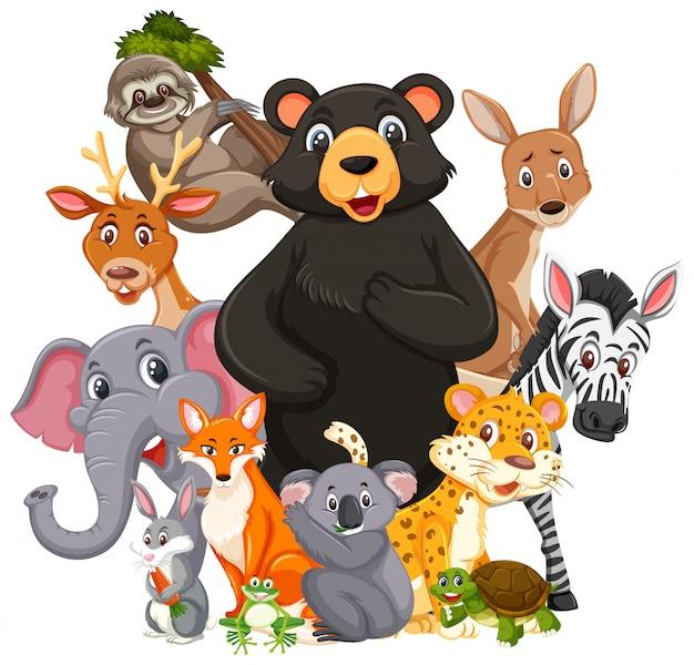Diferentes tipos de animais selvagens isolados