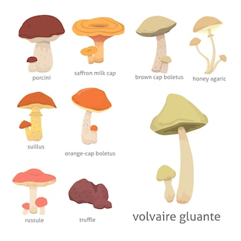 Diferentes tipos de cogumelos comestíveis de desenho animado.