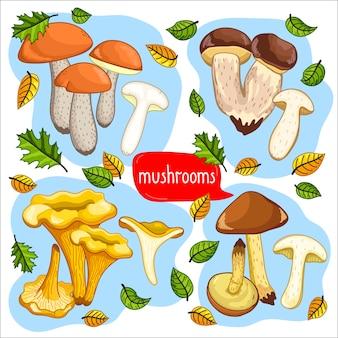 Diferentes tipos de ilustração de cogumelos