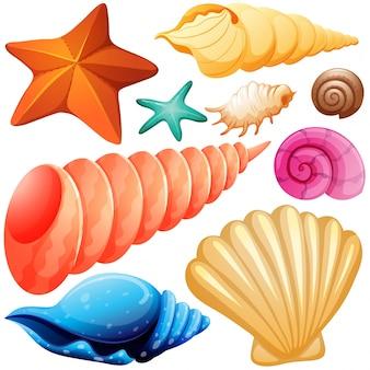 Diferentes tipos de ilustração de conchas marinhas