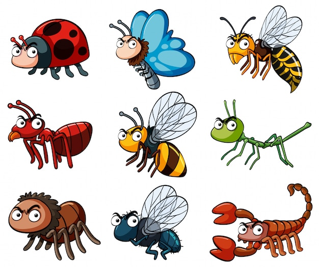 Diferentes tipos de insetos selvagens