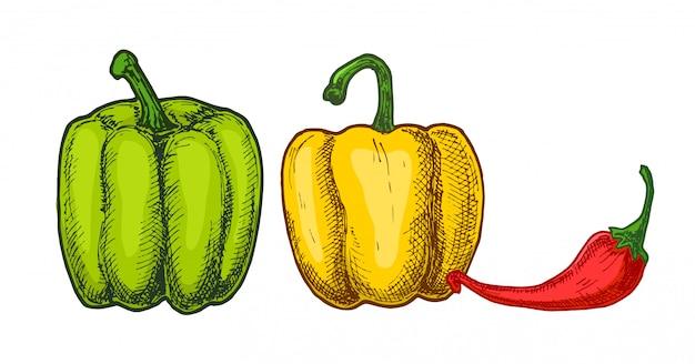 Diferentes tipos de pimentos. pimentas de cores diferentes.