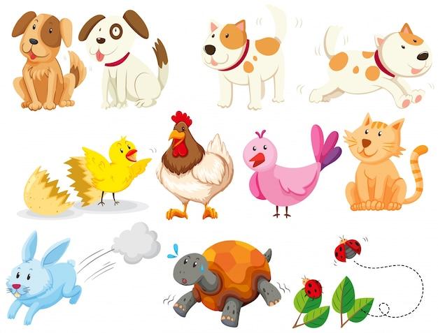 Diversos tipos de ilustração de animais domésticos