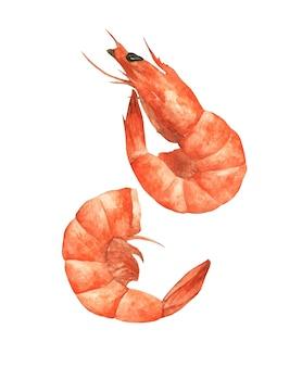 Dois camarões no fundo branco, ilustração de comida aquarela desenhada à mão.