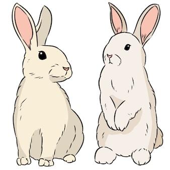 Dois coelhos de páscoa mão desenhada doodle colorido