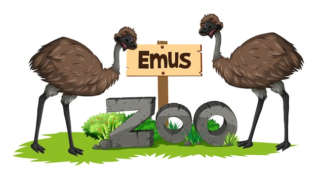 Dois emus no zoológico