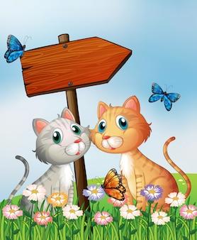 Dois gatos na frente de uma placa de flecha de madeira vazia