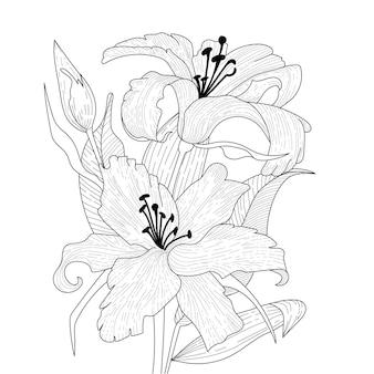 Dois lírios florescendo com um botão e folhas. páginas do livro para colorir. anti-stress para adultos e crianças.