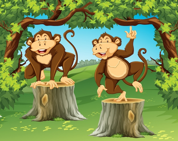 Dois macacos na selva
