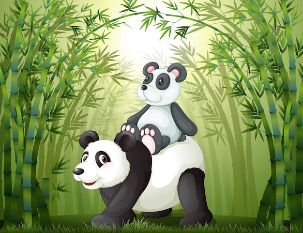 Dois pandas dentro da floresta de bambu
