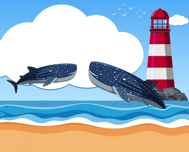Dois tubarões-baleia no oceano