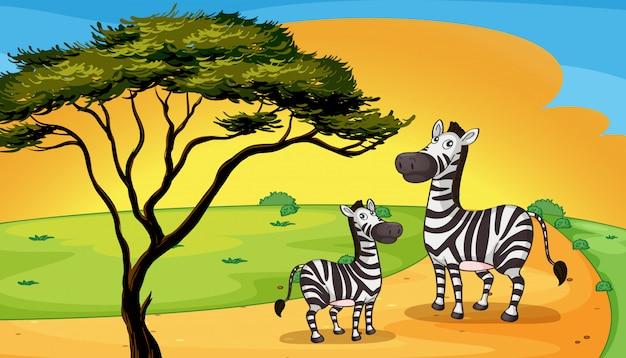 Dois, zebra, sob, árvore