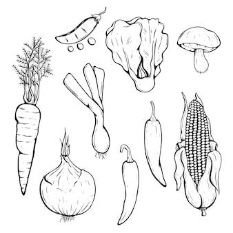 Doodle coleção de legumes frescos com pimenta, milho, cenoura e cogumelo