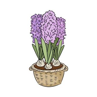 Doodle colorido de jacintos