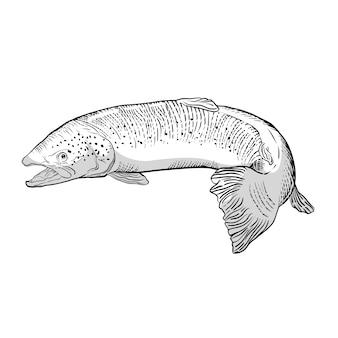 Doodle de comida de carne de peixe salmão