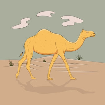 Dromedário, camelo de uma corcunda em pleno crescimento, vai para o deserto, esboça imagens coloridas