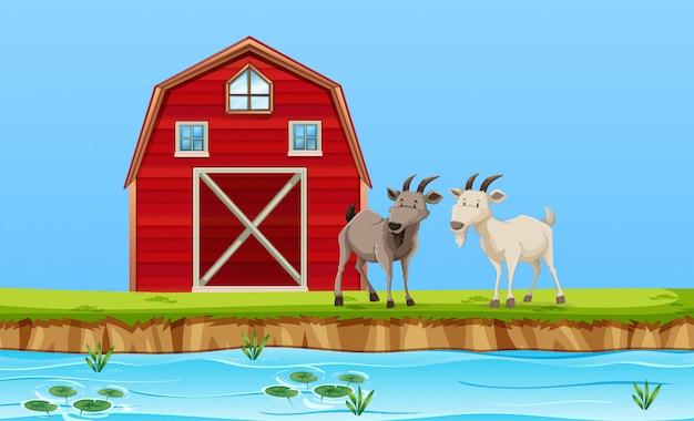 Duas cabras na cena da fazenda