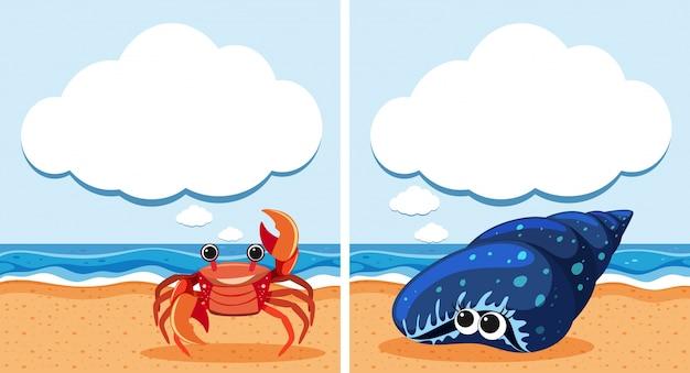 Duas cenas com caranguejo e casca