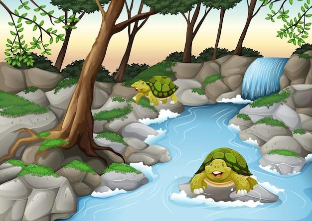 Duas tartarugas vivendo no rio