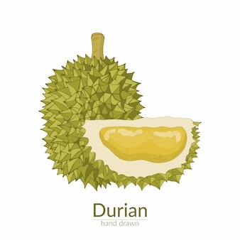 Durian inteiro e cortado. ilustração vetorial desenhada à mão