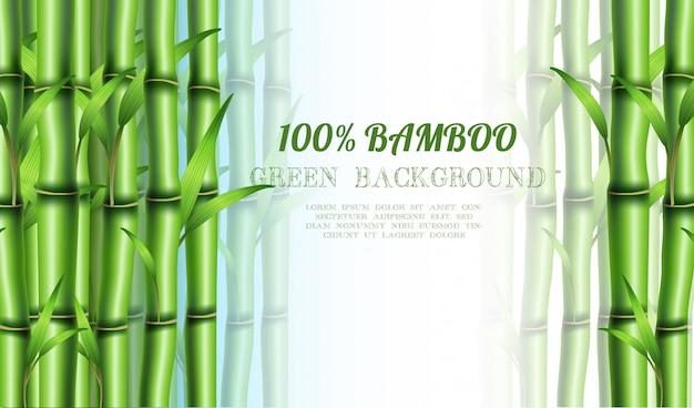 Eco de bambu. com copyspace para o seu texto.