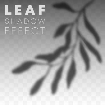 Efeito de sobreposição de sombra de folha em fundo transparente