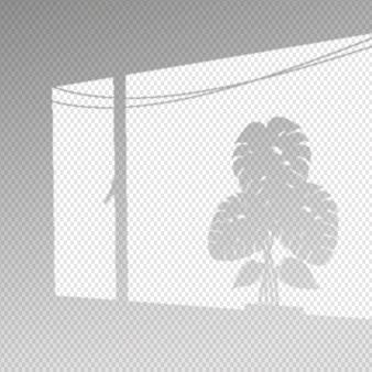 Efeito de sobreposição de sombras transparentes com folhas de monstera