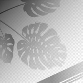 Efeito de sobreposição de sombras transparentes com folhas