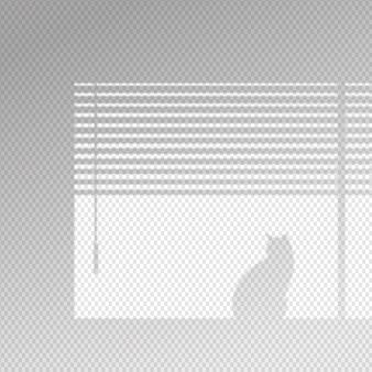Efeito de sobreposição de sombras transparentes com gato