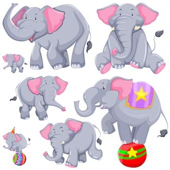 Elefante cinzento em diferentes ações