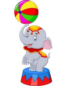 Elefante de circo com uma bola listrada fica