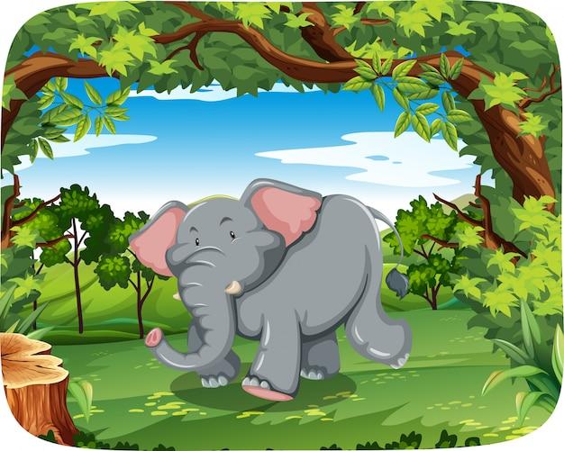 Elefante em estado selvagem
