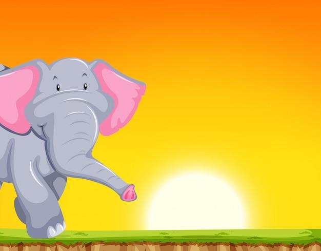 Elefante, em, pôr do sol, cena