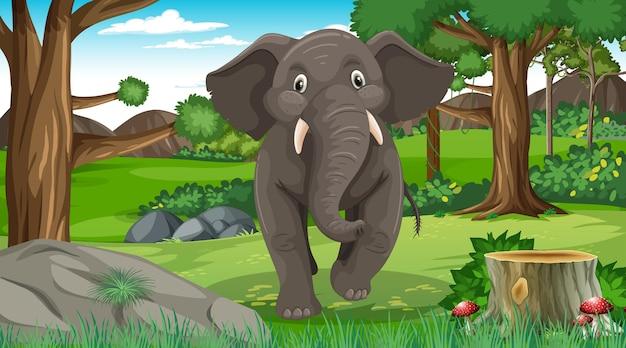Elefante na floresta ou cenário de floresta tropical com muitas árvores