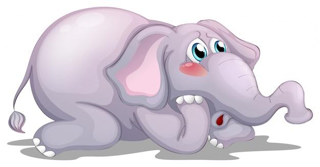 Elefante triste em branco
