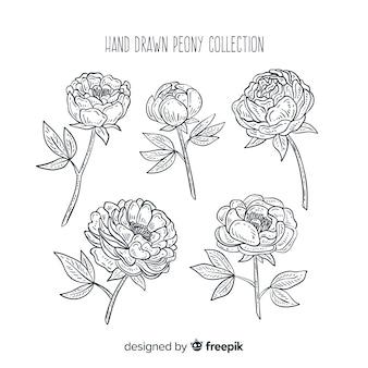 Elegante coleção de flores de peônia mão desenhada