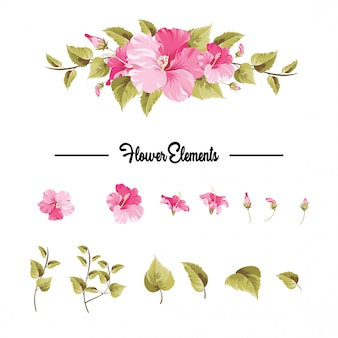 Elemento de buganvílias rosa