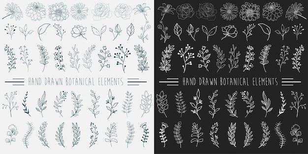 Elementos botânicos desenhados a mão.