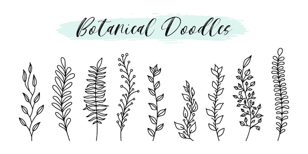 Elementos botânicos e florais de vetor de doodle desenhado mão definir estilo de linha. ramos de planta de esboço natural, folhas, bagas para design de mídia social, emblemas, etiquetas, branding.