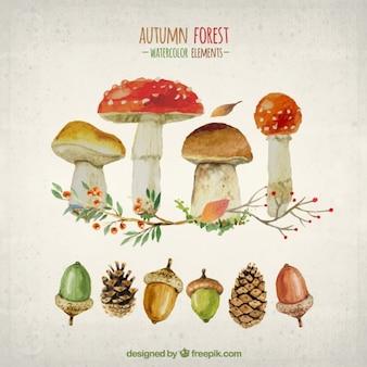 Elementos da aguarela de floresta do outono