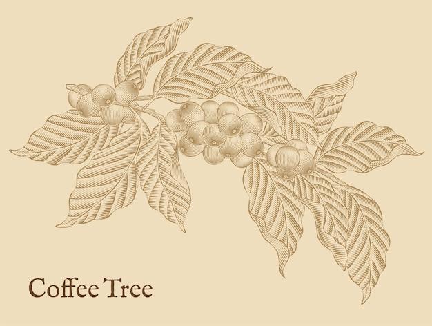 Elementos da árvore de café, cafeeiros retrô em estilo de sombreamento de gravura