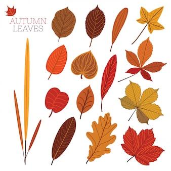 Elementos de design da folha.