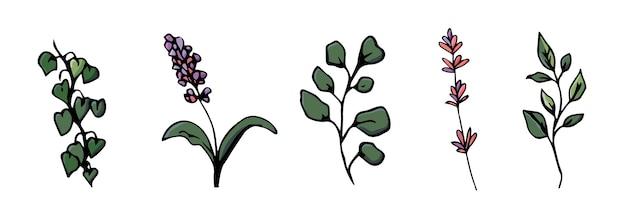 Elementos de design floral desenhados à mão, flores e folhas para decoração